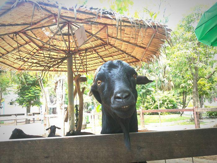Hello there. Zoo Animals  Goatfarm So Cute Natural Funny