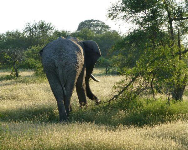 South Africa Africa Safari Animals Animal_collection Eye4photography  EyeEmbestshots EyeEm Nature Lover Nature_perfection Nature_collection