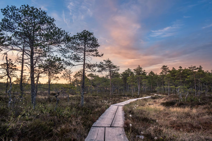 Scenic landscape at summer night in the swamp, National Park, Torronsuo, Finland. Atmospheric Mood Beautiful Bright Calm Countryside Evening Forest Forward Hiking Landscape Light Mire National Park Nature Night Path Peaceful Pine Silence Summer Sunset Swamp Tree Way