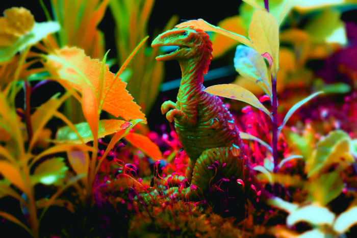 Dino Dinosaurs DinosaursAroundTheWorld Dino Multi Colored Flower Plant No People Nature Outdoors Beauty In Nature Close-up Day Fragility
