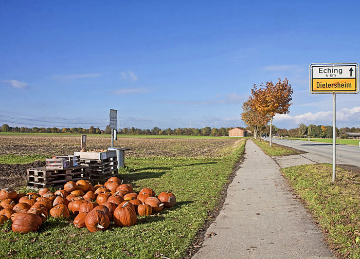 Agriculture Autumn Bavaria Countryside Day Fall Field Food Growth Halloween Harvest Nature No People Organic Outdoors Pumpkins Roadside Rural Scene Sell Sky