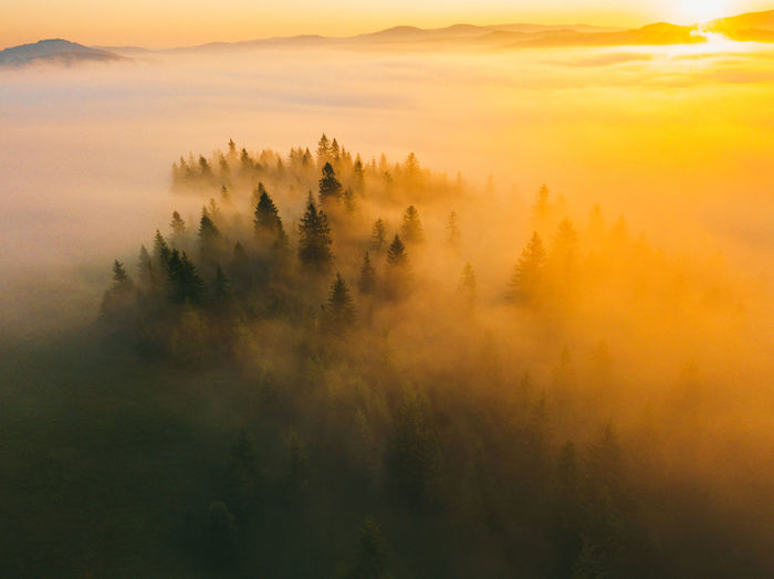 Misty mountain forest landscape in the morning
