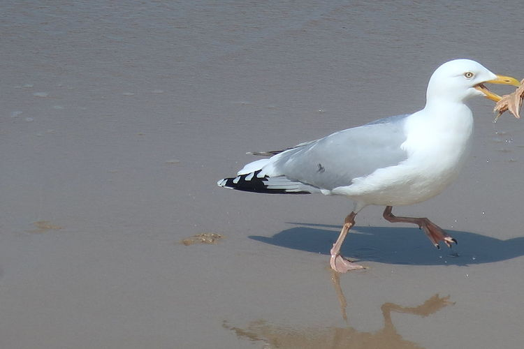 High angle view of seagull perching on beach