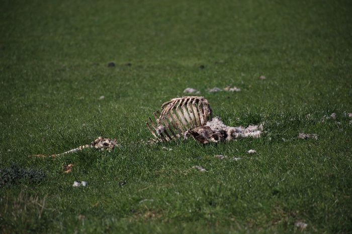 Check This Out Nature Lonely Place  Animals Bones