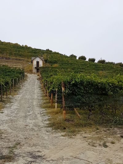 Foliage Vineyard Beauty In Nature Tranquility Travel Destinations Vineyards In Autumn Vineyard Cultivation Leaves In Autumn Agriculture Rural Building Autumn The Past Old Style Piedmont Italy Barolo Vineyards Langhe Rural Scene Details Textures And Shapes Agricultural Building Growth Hill