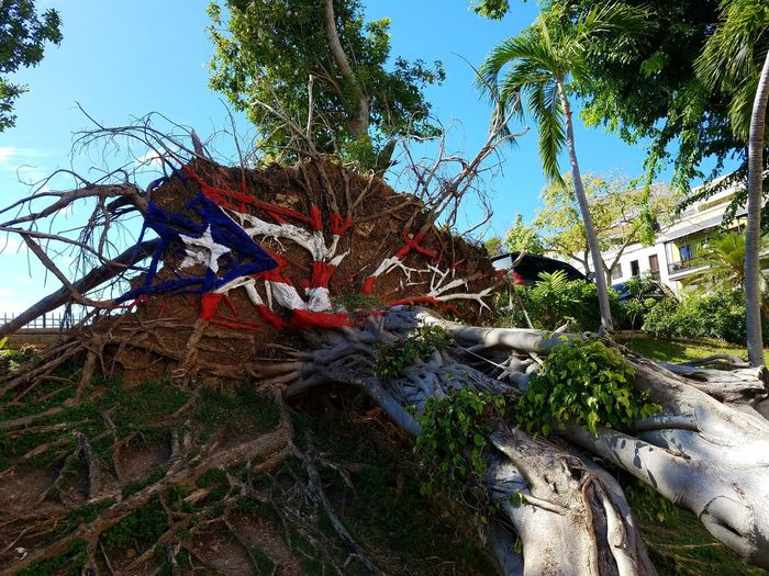 San Juan San Juan PR Island Life Travel Destinations Islandlife Island Hurricane Life Tree Pride Country Pride Hope Tree Branch Sky Close-up