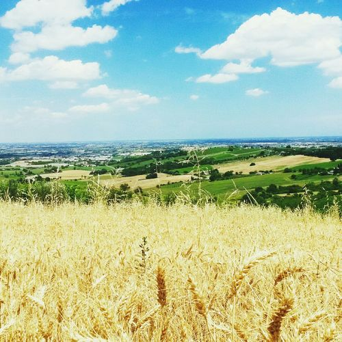 One day...Bertinoro Great Atmosphere Beautiful Place Landscape Relaxing Nature Bertinoro Biagio Antonacci