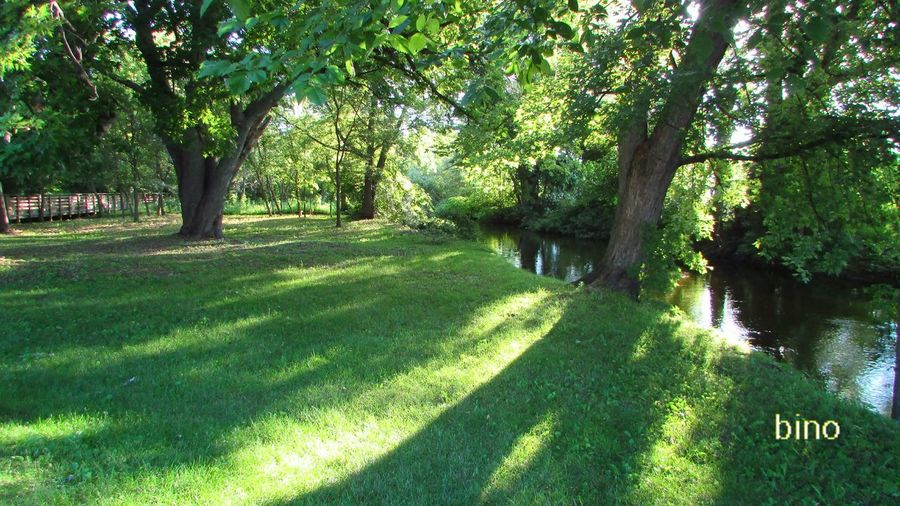 Taking A Walk Around My Neighborhood Tranquility Lots Of Green!! Clam River Walkway Light And Shadow Cadillac Michigan