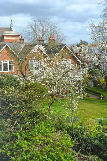 Architecture Building Exterior Built Structure Church Steeple Day English Garden Style English Gardens English Houses Flowering Trees Growth House House And Garden London Nature No Effects, No Filters, Just Me No People No People Outdoors Outdoors Residential Building Spring Flowers Springtime Blossoms Trees