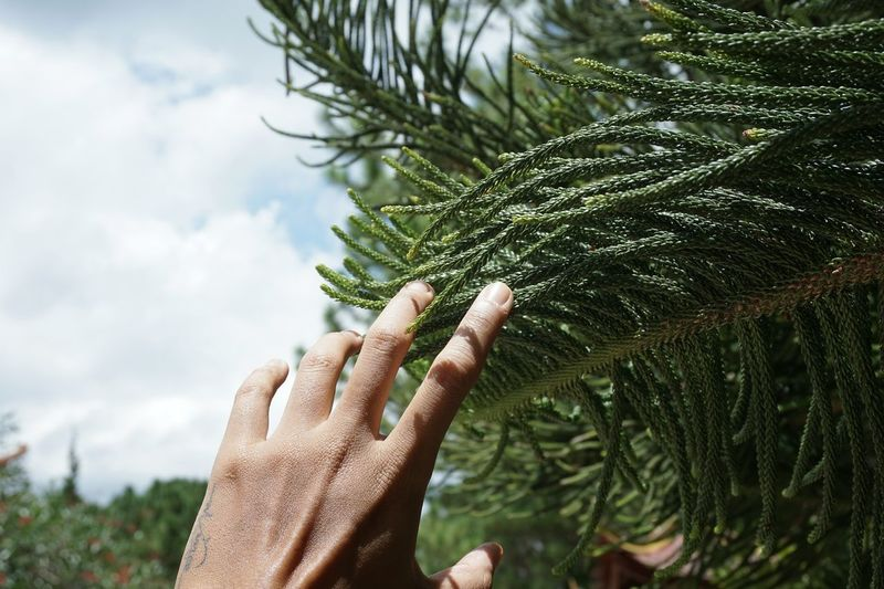 Close-up of hand on touching branch against sky