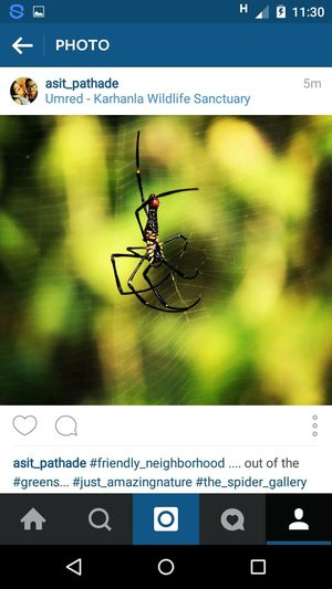 Spiderweb Wildlife & Nature Spider Gallary Wildlife At Its Best Taking Photos Travelling Photography EyeEm Best Shots EyeEm Gallery Nature Instapic