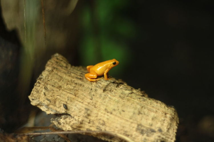 froggy in the Zoo de Vincennes Frog Zoodevincennes Wildlife & Nature Nature Animal Themes
