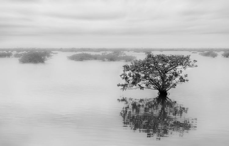 Water tree Atmospheric Mood Beauty In Nature Black And White Cloud - Sky Lake Outdoors Reflections In The Water Sky Tranquil Scene Tranquility Water Water Reflections