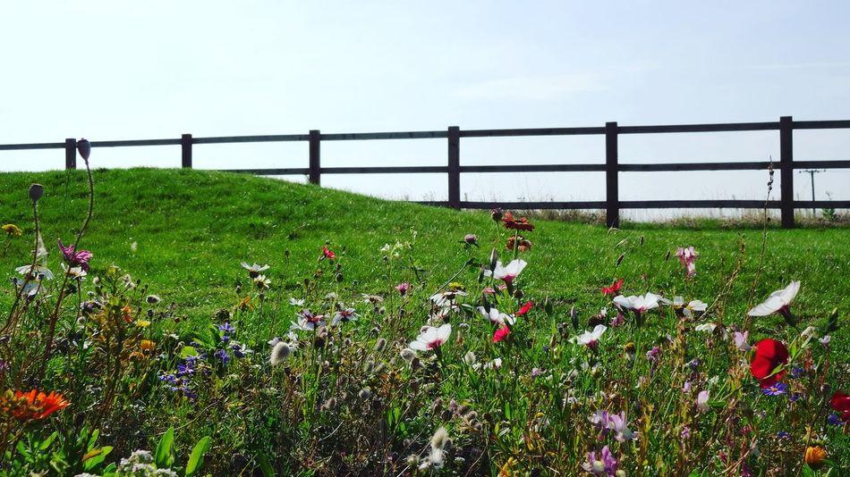 Flower Outdoors Nature Scenics Wild Flowers Summer morning
