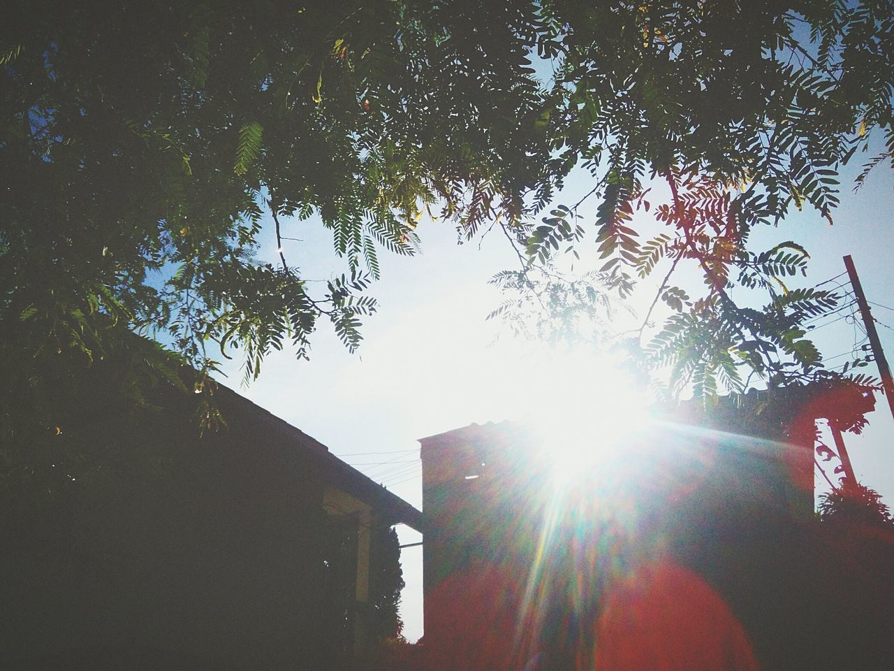 lens flare, tree, sunbeam, low angle view, sunlight, sun, outdoors, built structure, day, silhouette, building exterior, growth, architecture, sky, no people, nature