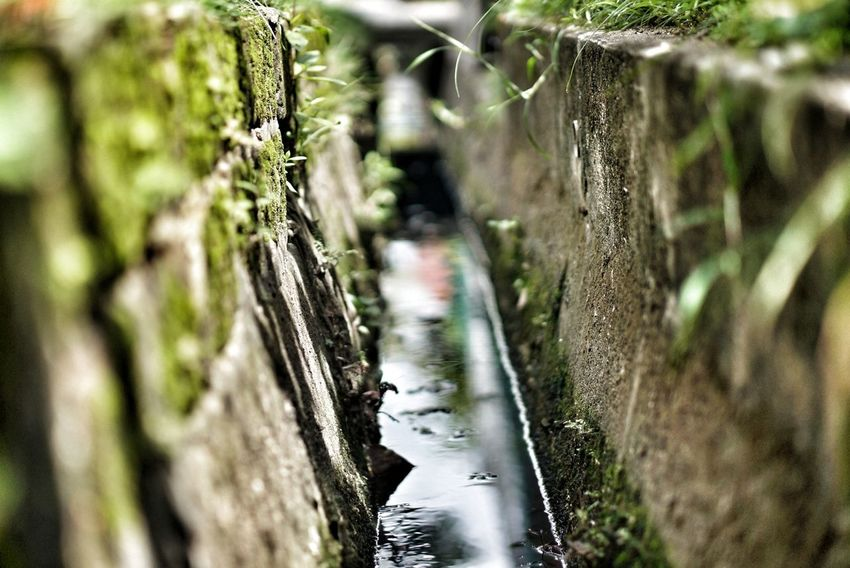 Drainage Channel Water No People Wood - Material Nature Outdoors Day Close-up Tranquility Beauty In Nature Tree Spider Web