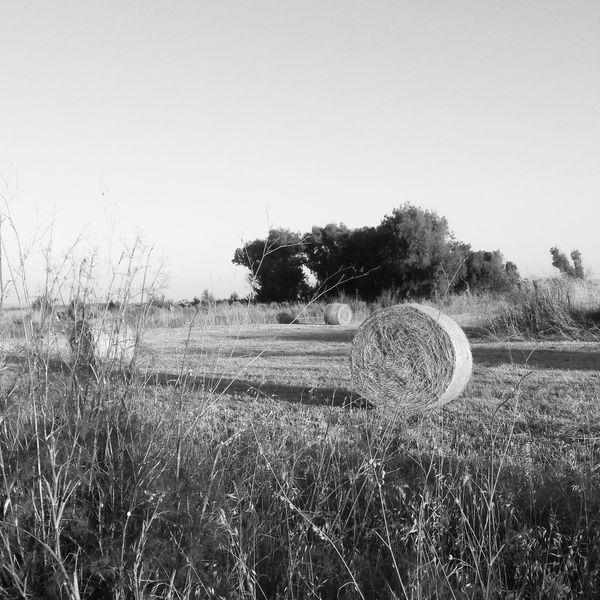 Sardinia Sardegna Italy  Black&white Rotoballe Sardinian Countryside
