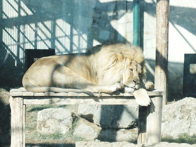 One Animal Mammal Animal Themes Zoo Animal Animals In The Wild Day EyeEmNewHere