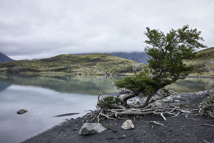 Patagonian Lake Shore Chile Grass Torres Del Paine National Park Tree Beauty In Nature Body Of Water Day Dead Wood Famous Place Lake Mountains No People Outdoors Overcast Patagonia Rocks Scenics - Nature Shore Line South America Travel Destinations