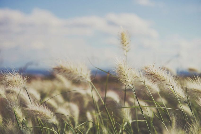 TCPM Nature Field Uncultivated Tranquility Beauty In Nature Plant Spring EyeEm Best Shots Photographer Art Is Everywhere Photooftheday Landscape_Collection Color The Color Of Love Nature Landscape Relaxing Feeling Good