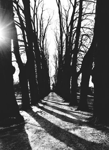 Alley Of Trees Shadows & Lights Blackandwhite Sun Light Trees Casting Shadows Lines Symmetrical Nature Harmony Natureinthecity EyeEm Best Shots - Black + White Urban Landscape Eye4photography  Week On Eyeem Taking Photos Winter Snow Visitoslo