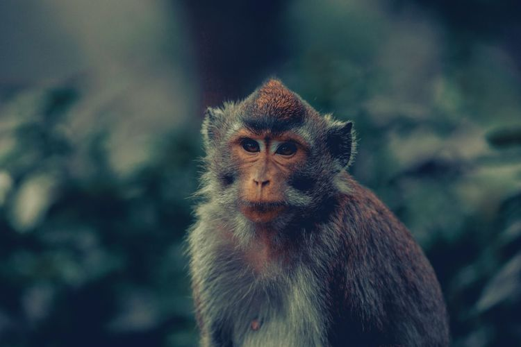 So Serious Moody Nature Moody Nature Moody Faded Moody Green Monkey Wild Animal Animal Animal Themes One Animal Animal Wildlife Vertebrate Focus On Foreground Animals In The Wild