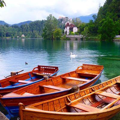 Немного лирики, и белый лебедь на озере , и снова пятница, и жизнь-удивительная штука! путешествия Хорошеенастроение словения озеро Блед лебедь красота travel tourism Slovenia lake Blad good mood