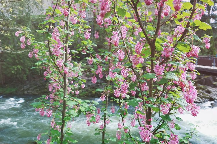 Growth Nature Flower Tree Freshness Beauty In Nature Plant No People Pink Color Outdoors Day Fragility Branch Close-up