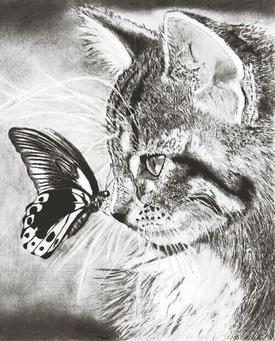 Cat and butterfly . ..like it..=)