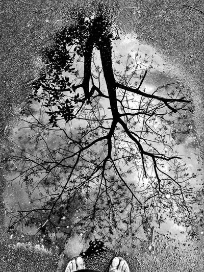 The world behind the mirrors... Abstractporn Reflection Natural Reflections Monochrome Abstract Tree And Sky Water Reflections Black & White Outdoors Serenity Rainy Days Eyem Best Shots EyeEmNewHere EyeEmBestPics Eyeem Market Mobile Photography Smartphone Photography Backgrounds Full Frame Nature