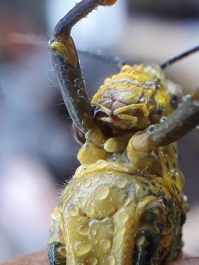 Portrait Insect
