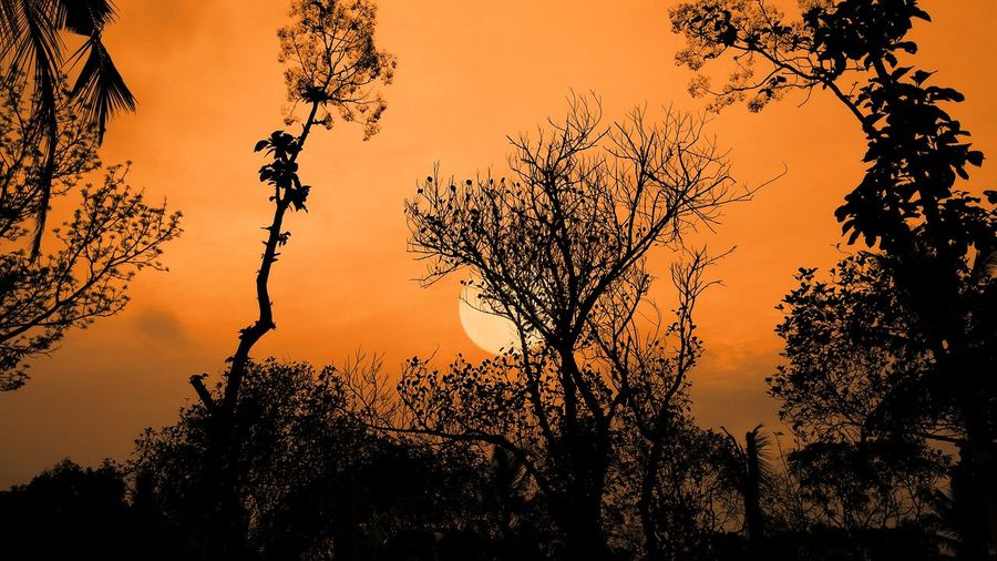 ..my.. never.. ending.. search.. for.. a.. beautiful... morning... Sunrise Tranquility Dreams Silence Of Nature Colorful My World Cloud - Sky Orange Color Kerala Silhouette Sunset Tree Nature Outdoors No People Sky Beauty In Nature Scenics Landscape