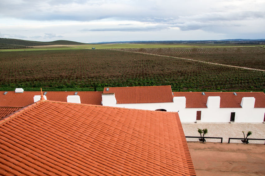 Torre de Palma, Wine Hotel. Monforte, Portugal. Agriculture Day Landscape Nature No People Outdoors Scenics Solar Panel