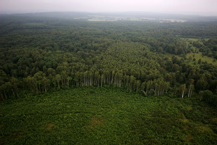 Marge Edge Outskirts View From Above View From The Top View Into Land Dronephotography Viewfromthetop Droneshot Drone Photography From My Point Of View From Above  From Where I Stand Earth_Collections Earth Forest Photography Forest Trees And Nature Trees Beauty In Nature Tree Trunk Fog Foggy Green Color Green Fields Horizon Tree Landscape Sky Green Color The Great Outdoors - 2018 EyeEm Awards
