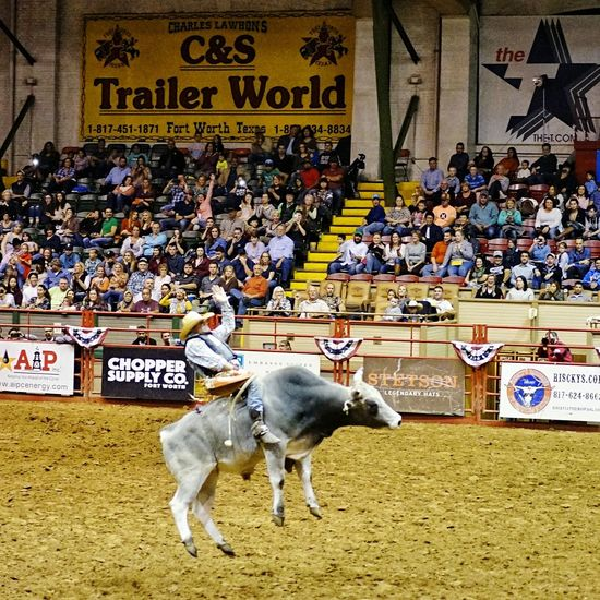 Domestic Animals Animal Livestock Text Animal Themes Cultures Stadium Mammal Crowd People Outdoors Day StockyardsChampionship Cowtown Coliseum Fort Worth, TX Cowboy