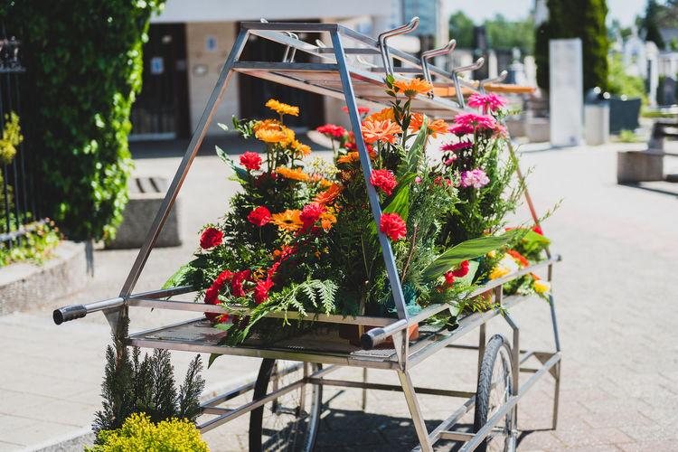 Flower pot plants on street in city