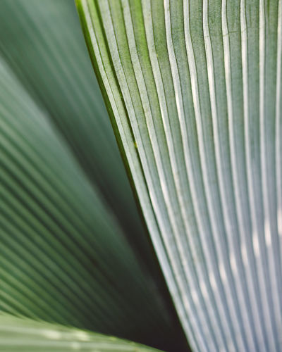Spring in Kew Spring Springtime Spring Flowers spring into spring Spring Has Arrived Green Color Close-up Leaf Backgrounds Pattern Plant Part Full Frame Plant Growth Nature Textured  Palm Leaf Beauty In Nature Freshness Natural Pattern Day Palm Tree Striped Outdoors Leaves