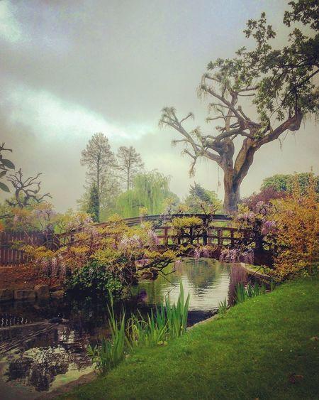 The Great Outdoors - 2016 EyeEm Awards Heaven On Earth Rainy Season Rain Curtain Small Bridge Smog Filter Romantic Landscape Beautiful Garden Like A Painting