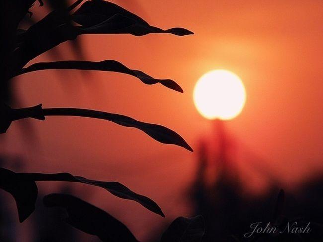 IPhoneography Sun_collection EyeEm Nature Lover EyeEm Best Shots