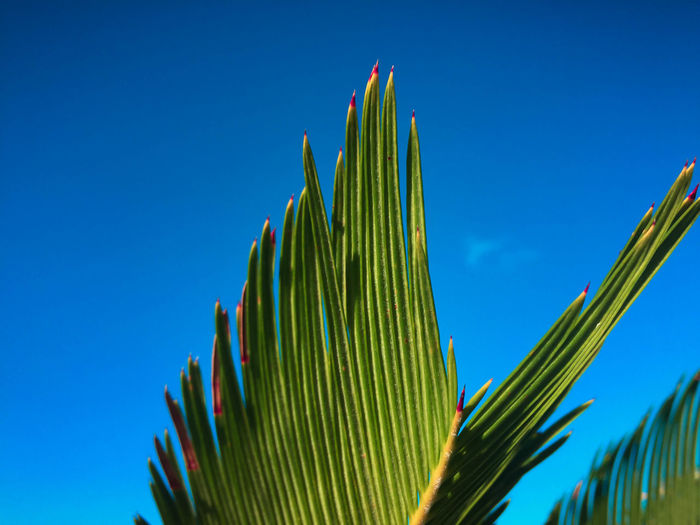 Low Angle View Of Plant Against Clear Blue Sky