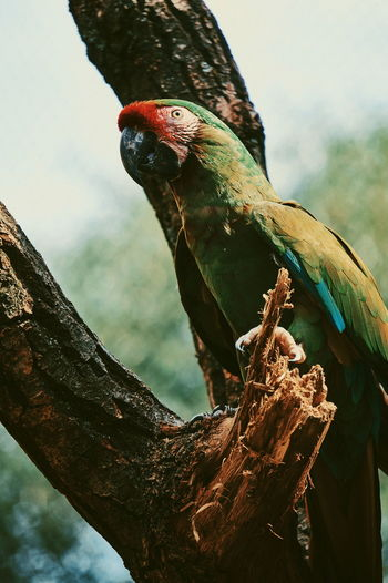 Vertebrate Animal Animal Wildlife Animal Themes Bird Animals In The Wild Tree Perching One Animal Focus On Foreground Branch Plant No People Nature Parrot Day Low Angle View Outdoors Close-up Beak