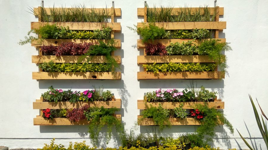 Plants On Wooden Crates On Wall