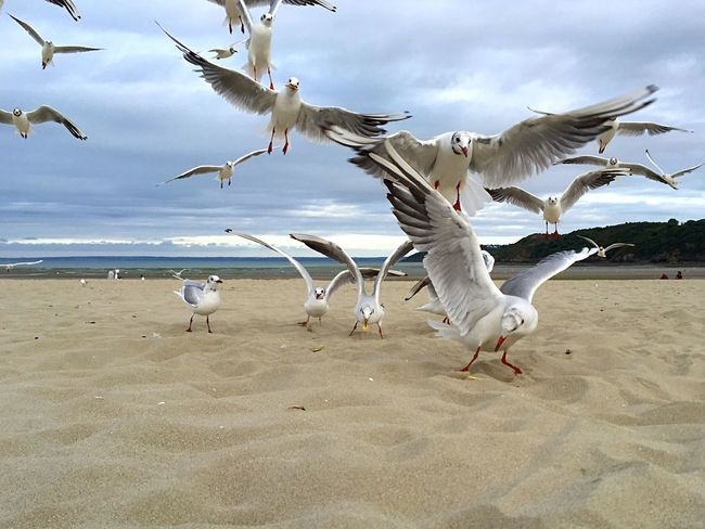 Mouette Plage Beach Seagull Seagulls Seagulls And Sea Seagulls In Flight Seagull ın Flıght Seagull And Sky Seagulls Flying Over Me Sea Sable Sand Vol D Oiseau Bretagne Brittany Landscape No People Cote Bretonne Littoral Non-urban Scene Coastline Close-up Nature Mouettes