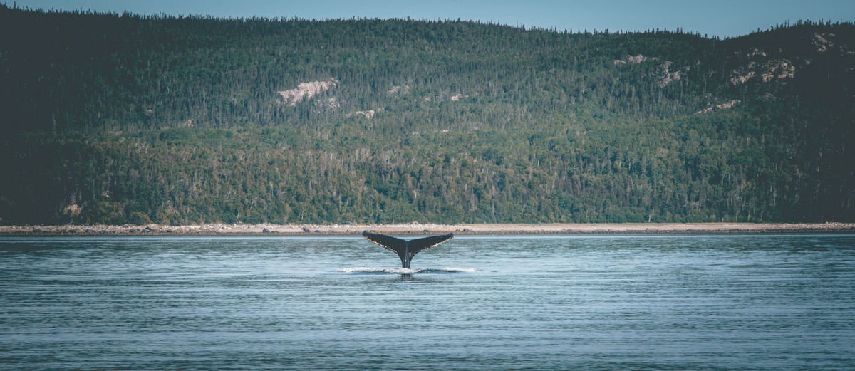 View of whales in sea