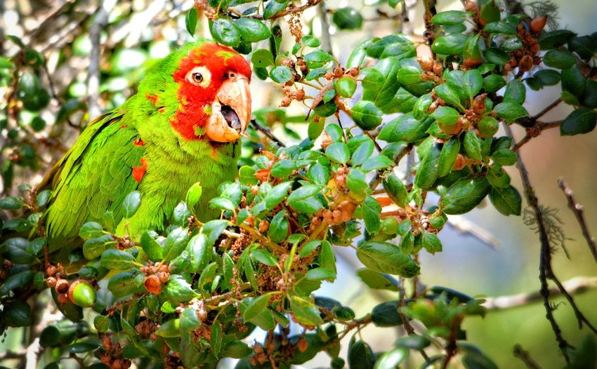 Close-up of parrot on tree