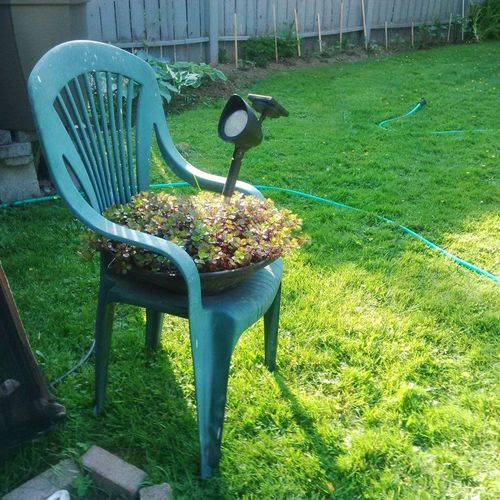 Absence Chair Day Freshness Front Or Back Yard Grass Green Color Growth High Angle View Lawn No People Outdoors Park - Man Made Space Plant Planter Refurbished Sunlight Sunset