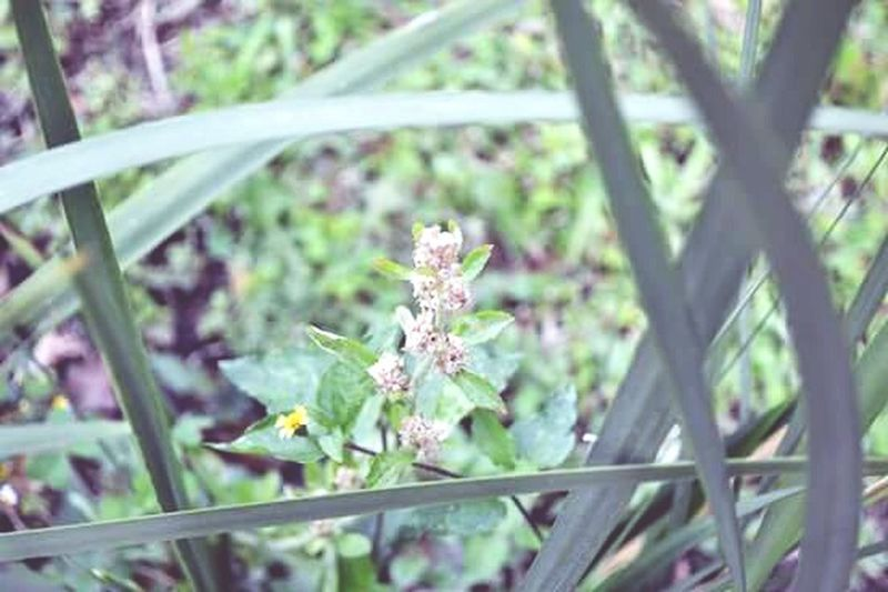 Flowers Actitud Living Life Green Nature Taking Photos Enjoying Life Beautiful City