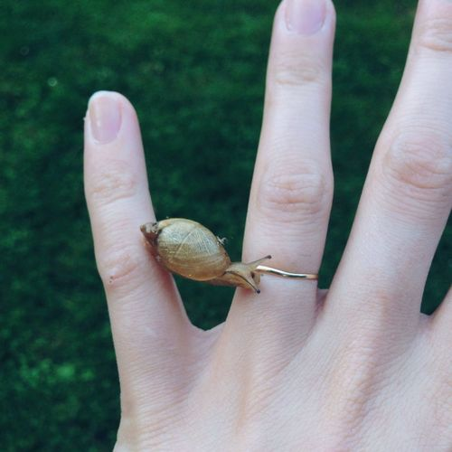 Close-up of snail on hand