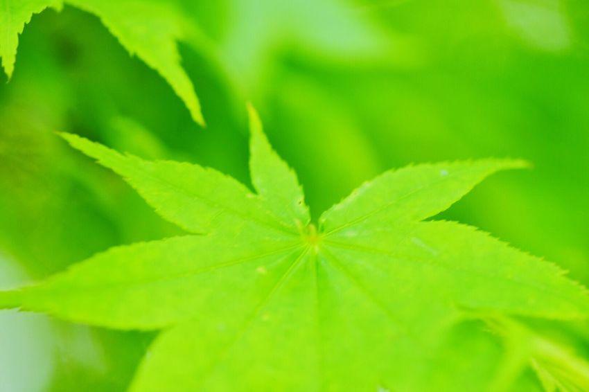 ニコン Nikon D750 Nikonphotography Flower NikonLife Nikon_photography Nikon Nikontop ニコンd750 マクロレンズ 緑 Green Green Color Green Green Green!