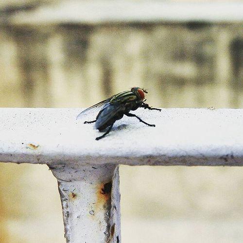 She rests on the RUSTED METAL STRUCTURE. Soi Streetofindia Ig_captures DelhiGram Dpc IPC Flavoursofdelhi Delhiwale Dfordelhi Nikonp610 Dilsedilli Indianphotographersclub Macro Housefly _oye Instagram